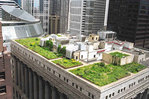 ICF Green Roof Construction in the United States - Chicago City Hall's Green Roof